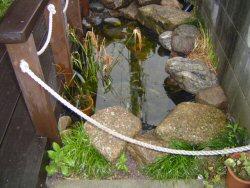 ビオトープ(池)